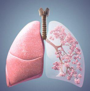Lung-Trachea-Alveoli
